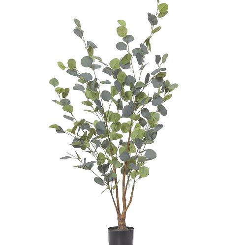Eucalyptus Tree 120cm