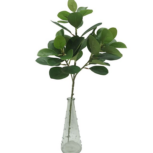 Ficus single stem