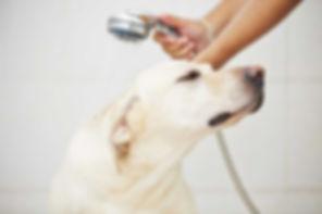 cães idosos e com doenças merecem cuidados adicionais