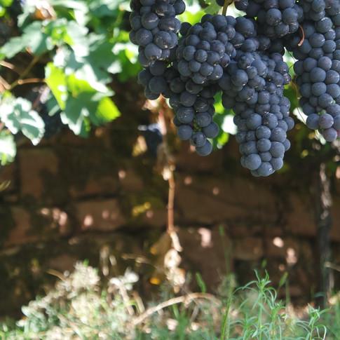 Regionaler Weinanbau