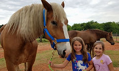Addi Cash the Draft Horse.jpg