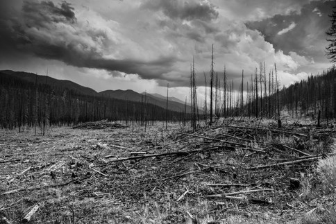 Forest blazed during the Rice Ridge Fire