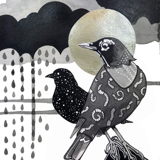 Robin Awaiting Rain