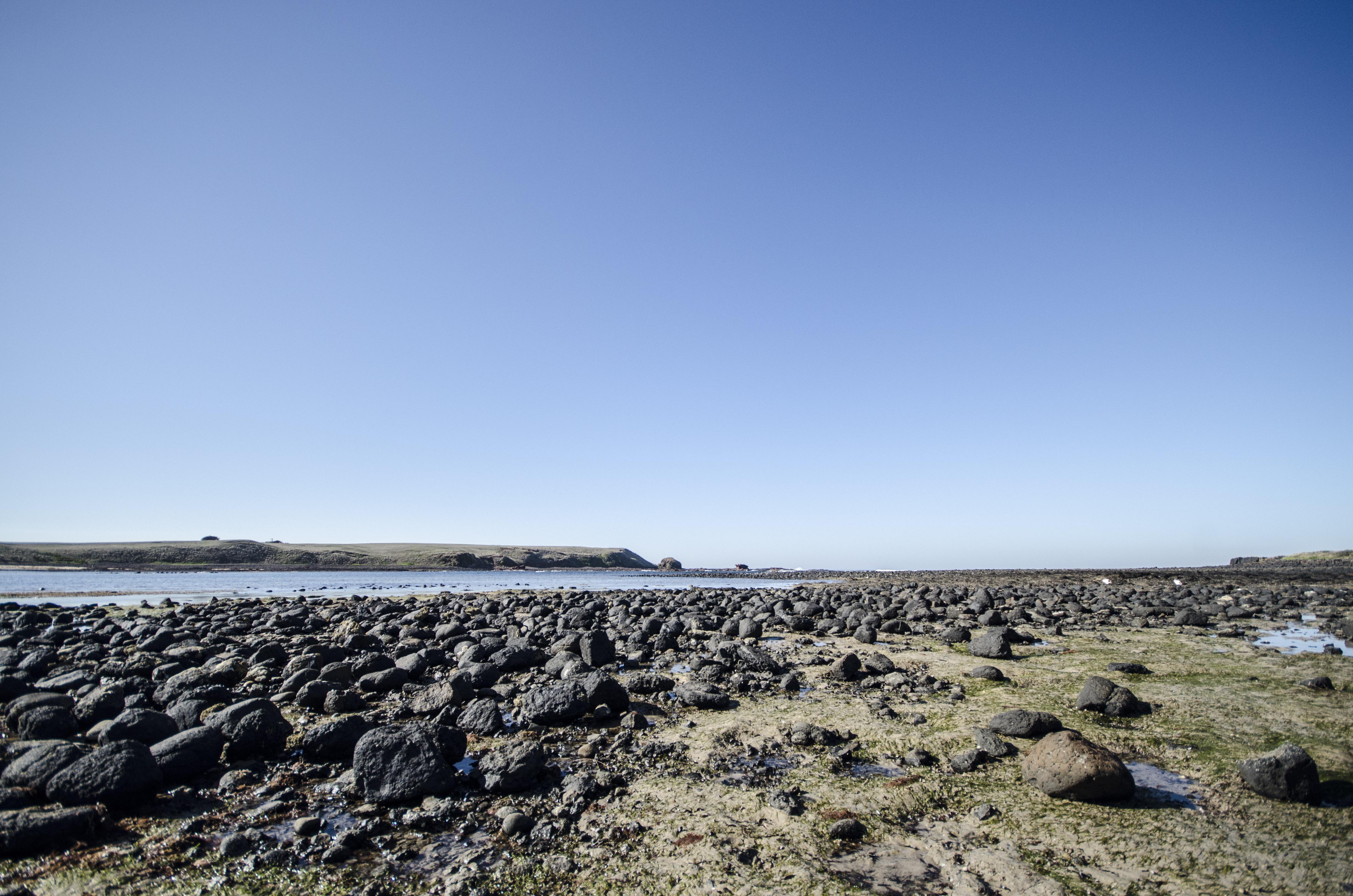 phiillip island-4