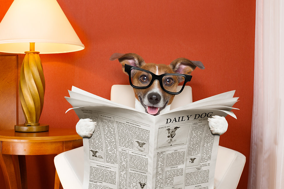 Dog wearing geye glasses and reading a newspaper