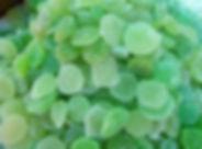 green-890793_1920.jpg