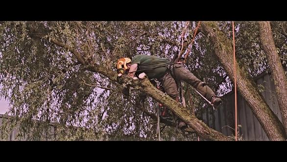 Kroonmeesters boomverzorging Delden