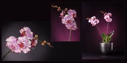 Fotostudio Lynda Borne Product fotografie