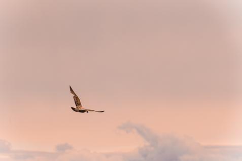 Birds_Scenic_Boston_May 2021
