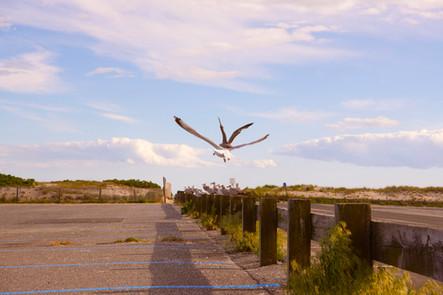 Smuggler's Beach_Birds_Cape Cod_2020.jpg