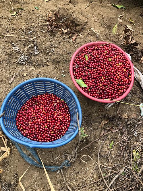 Organic Sulawesi