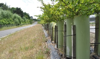 Highways Habitat Connectivity in Devon & Cornwall