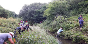 Summer task: Gatwick staff removing Himalayan Balsam along the River Mole, north of the terminals