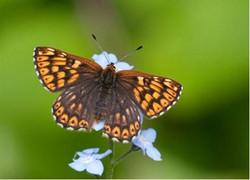 EWRA & Butterfly Conservation