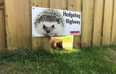 Give a Hog a Home
