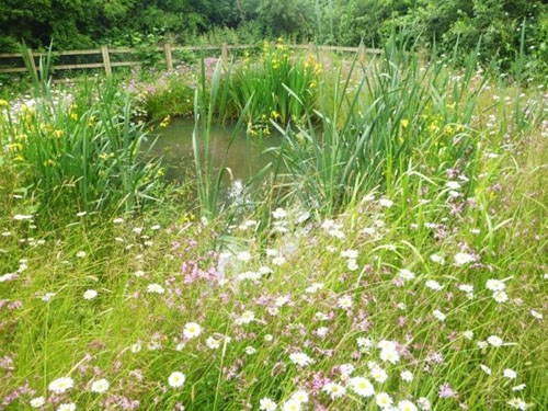 Wetland Habitat Creation