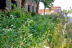 Reading Station Wild Flower Meadow