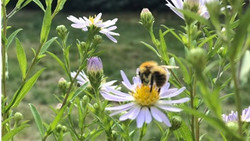 Sisk Seeds for Bees Campaign