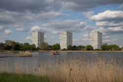 Urban Wetland Restoration