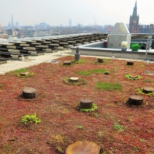 Kings Cross Development Living Landscape Roof Strategy