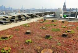 Kings Cross Development Living Landscape Roof Strategy