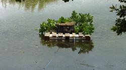 Backford's Forgotten Pond