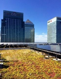 Canary Wharf Biodiversity Action Plan