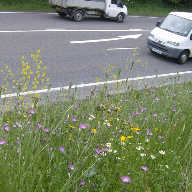 Overall winner 2015 - Area 1 Species Rich Grassland Create on Roadside Verges A30 & A38 to Penzance