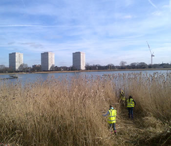 Reed Bed Management