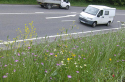 Area 1 Grassland Creation