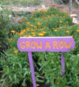 Grow a Row project blooming calendula