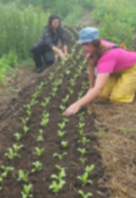 Planting calendula in Grow A Row project