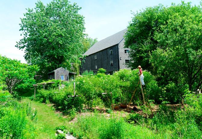 Creating a Healing Herb Garden