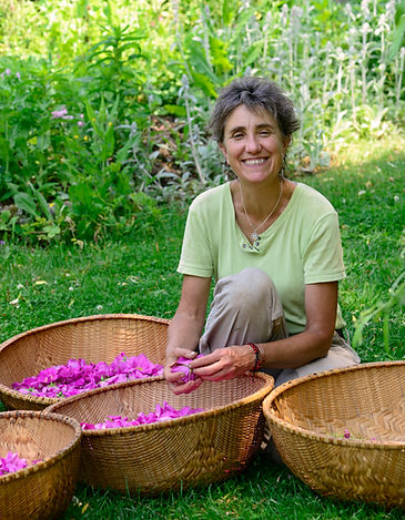 Herbalist Deb Soule with rose (rosa rugosa) harvest blossoms