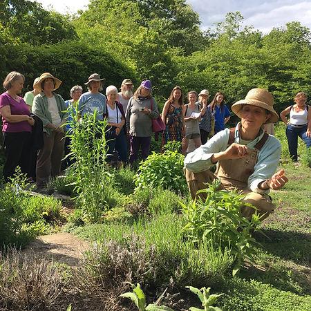 Deb Soule on a medicinal herb garden walk