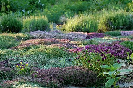 Medicinal herb sanctuary garden