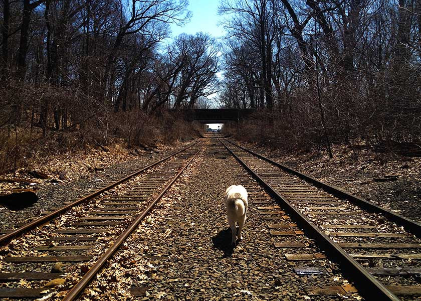 Norman-on-the-tracks-2.jpg