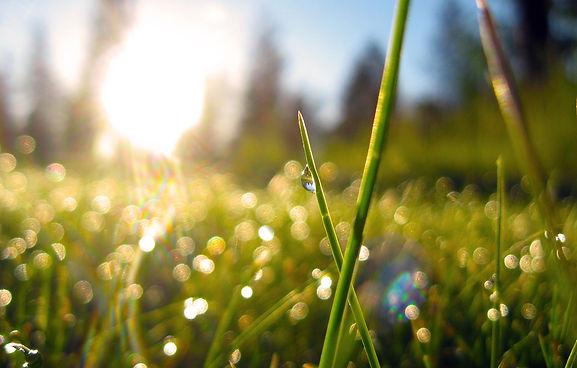 grass dew.jpg