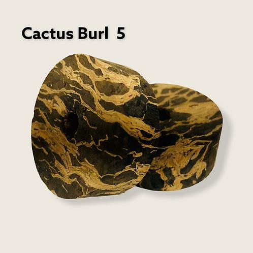 Cactus Burl 5