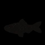 mustvalge meremaa logo.png