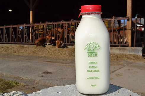 A jug of local milk used in many moisturizing soaps, pictured in front of Jersey cows.