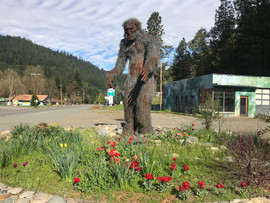 Bigfoot and Davis Rd Town View.jpg