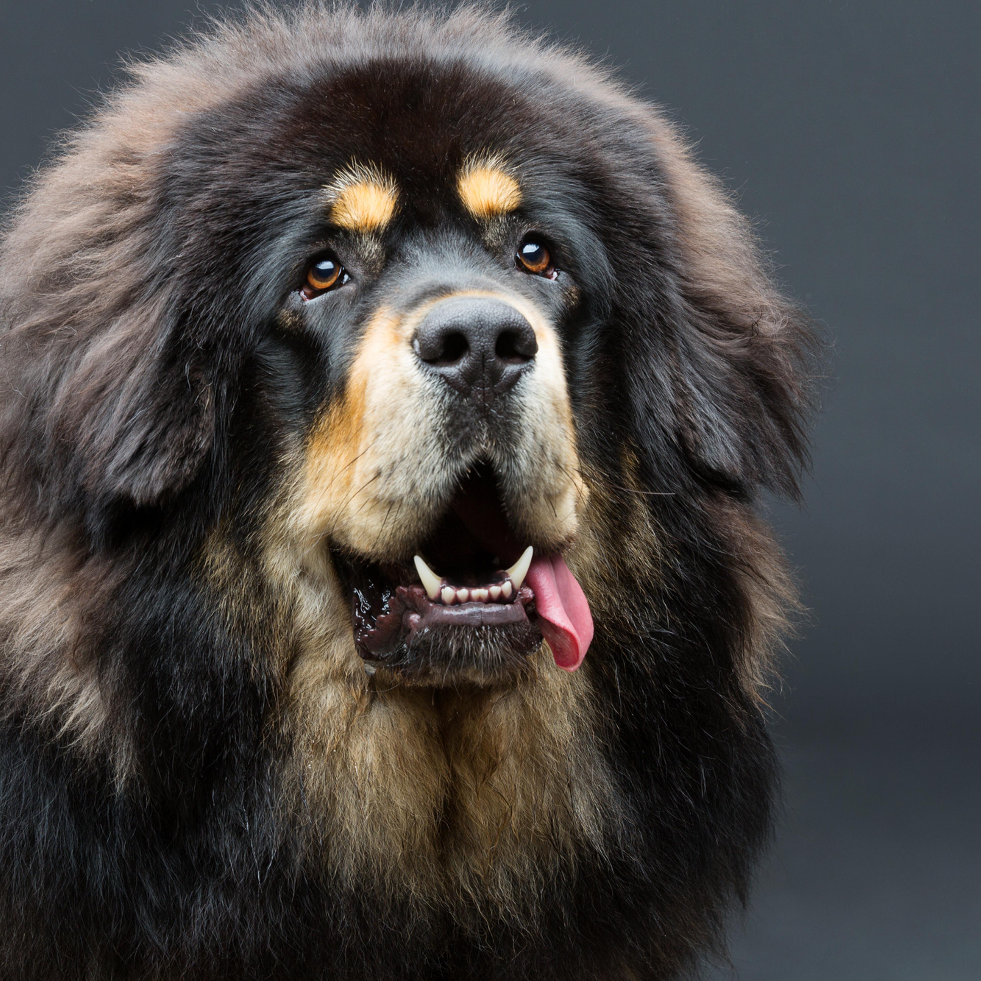 Extra Large Dog Bath & Blow Dry
