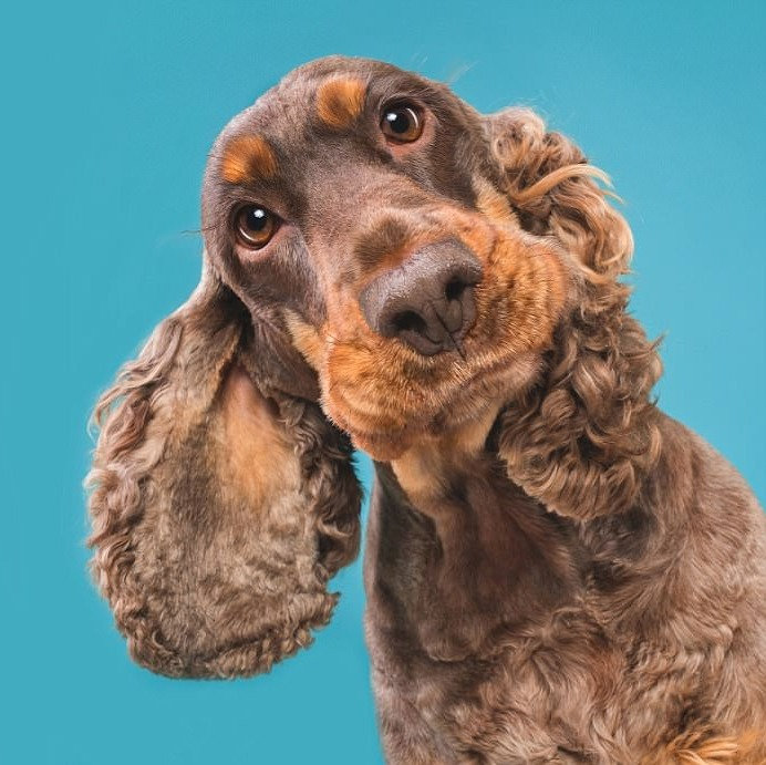 Medium Dog Full Groom