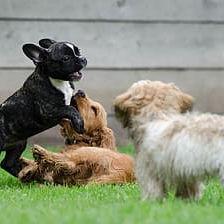 Doggy Daycare Half Day