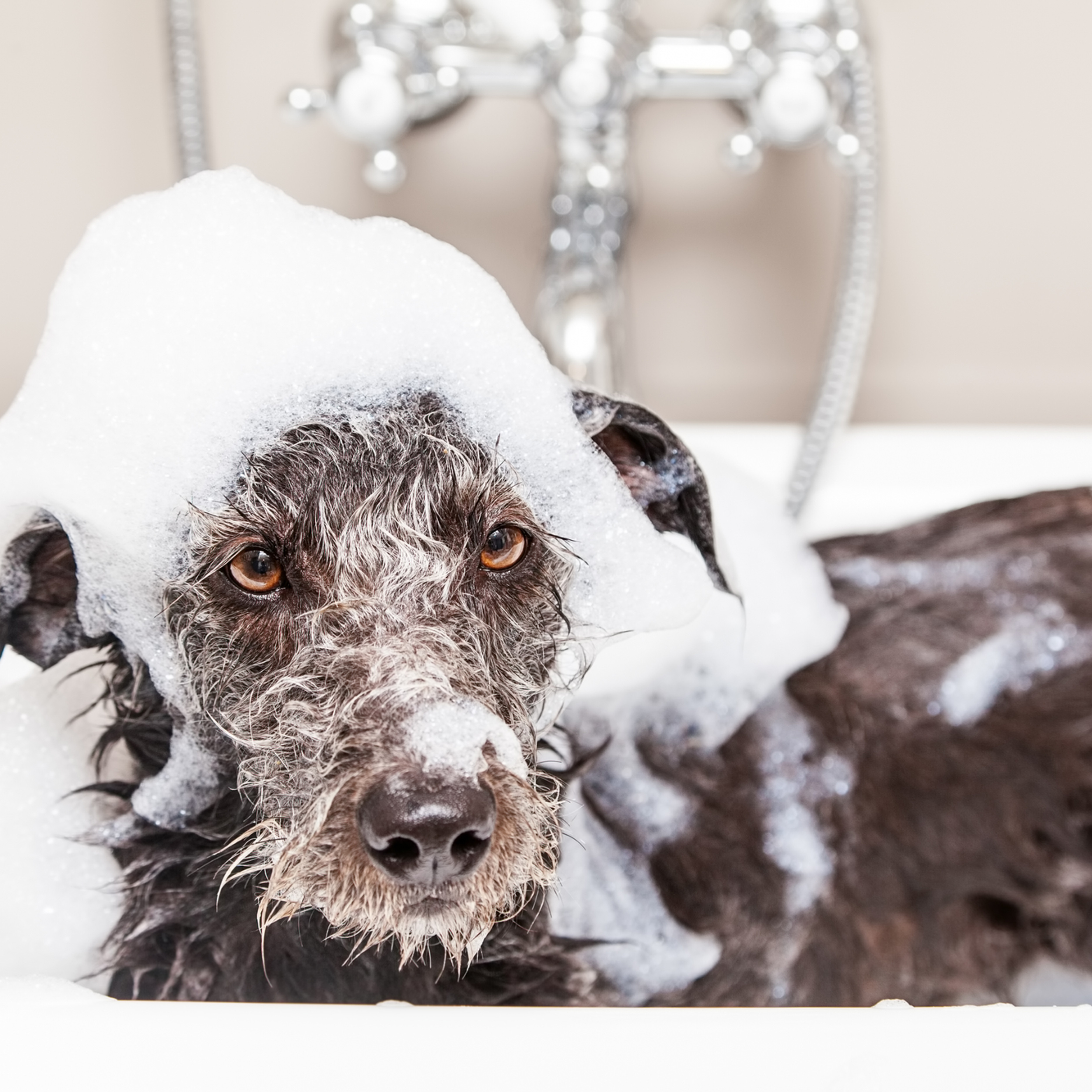 Medium Dog Bath & Blow Dry
