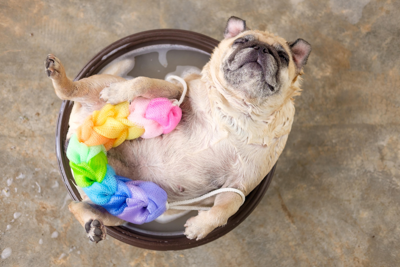 Small Dog Bath & Blow Dry