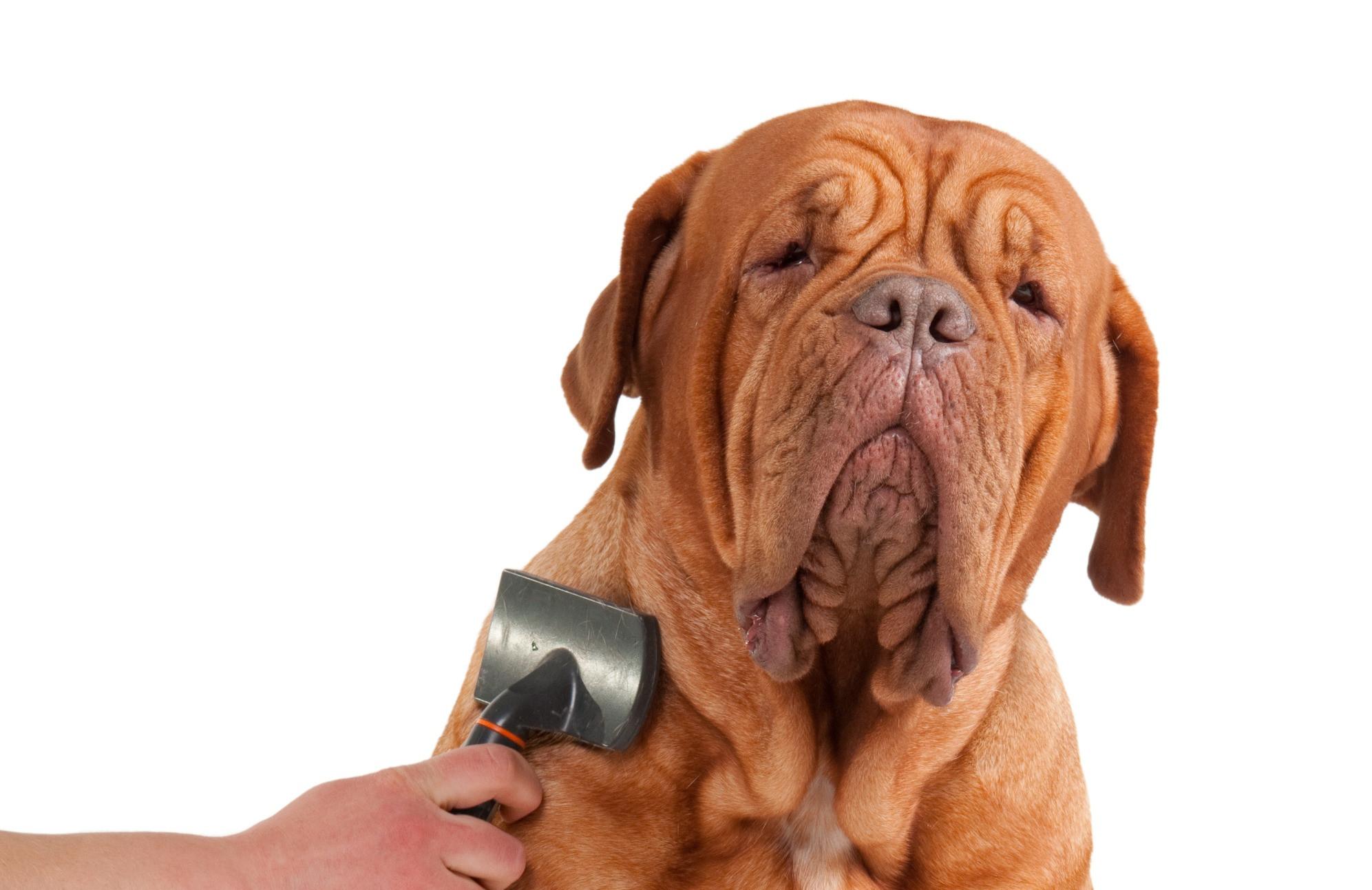 Large Dog Full Groom