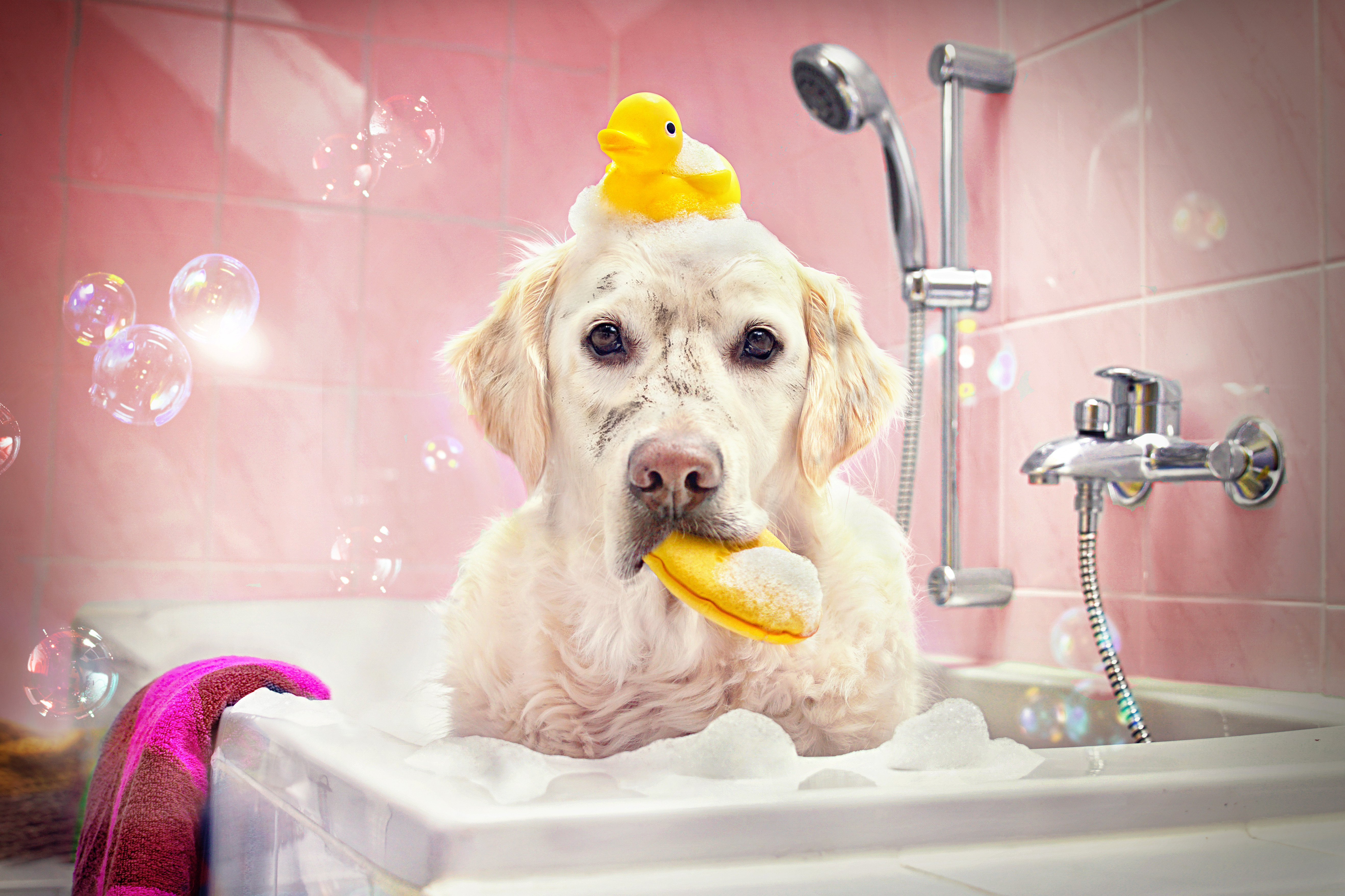 Large Dog Bath & Blow Dry
