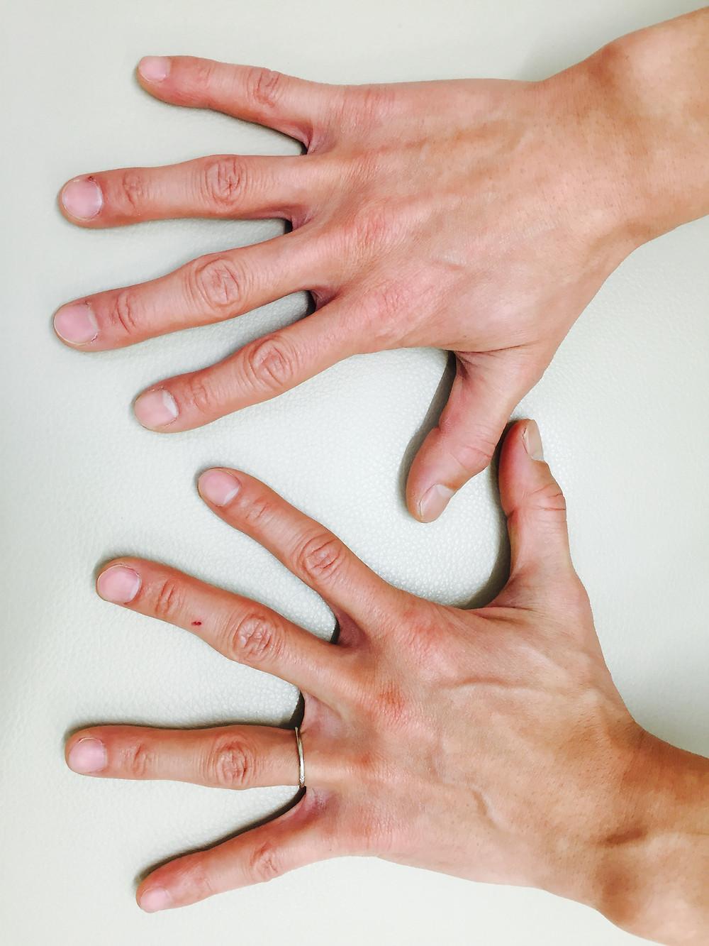 ヨモギダの手